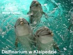 Delfinarium Kłajpeda - Pałanga Morze Bałtyckie